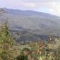 Cogliere la frazione di secondo Gunaratana cap. 13 Letture a La Pagoda VIDEO