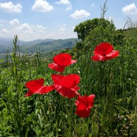 Giugno '19 da Arezzo ad Assisi con i Monaci del Plum Village