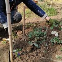 """Nel giardino, strumenti Zen per scavare la terra. Meditare con il Sangha """"Acqua Silente"""""""